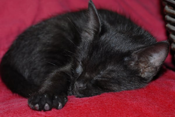 Meine Inspiration - Anton der kleine Schlafexperte