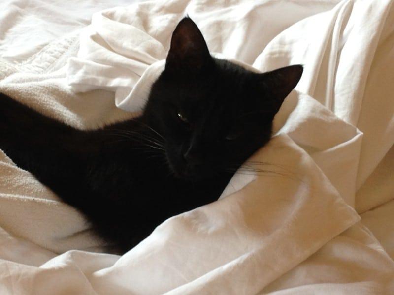 Die Katze im Bett
