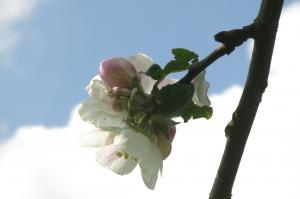 Licht tanken und Blütenträume entdecken