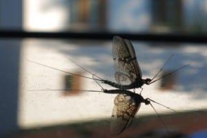Mückenzauber und Ausschlafen