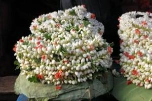 duftende Jasminblüten